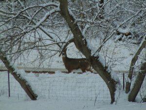 Deer in wisconsin